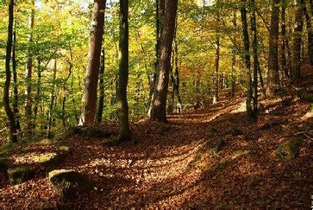Le En Bois Flotté Promenons Nous Dans Les Bois Le Clo 238 Tre La Ligue