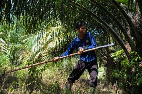 l indon 233 sie fustige la taxe additionnelle sur l huile de palme magazine goodplanet info