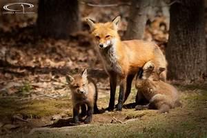 Mr Fox : coppola photography fantastic mr fox ~ Eleganceandgraceweddings.com Haus und Dekorationen