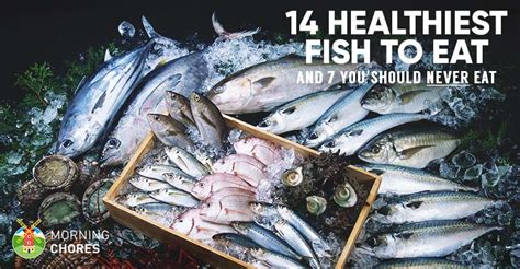 healthiest  fish  eat    absolutely
