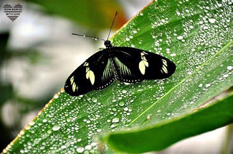 Botanischer Garten München Exotische Schmetterlinge by Komm Wir Fliegen 252 Bers Land Schmetterlinge Fliegen Mit