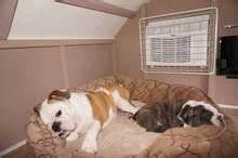 best 25 large dog house ideas on pinterest outdoor dog With xx large dog house