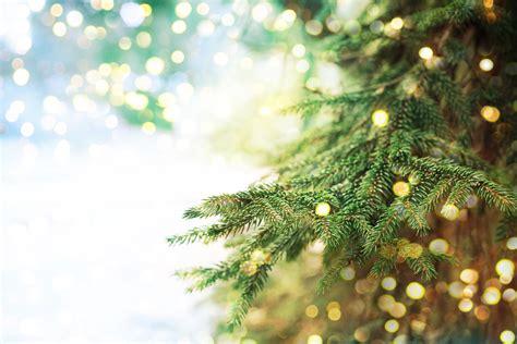 closeup  christmas tree background rhinegold