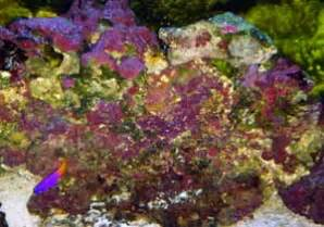 rock  saltwater aquariums