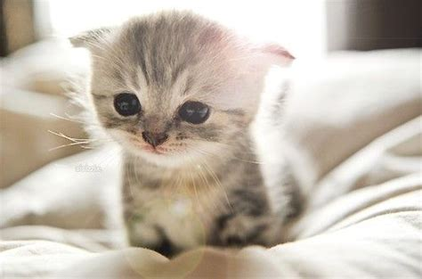 can cats cry 5 reasons why your kitten is crying at night