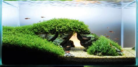 aquascape designs how to re create a landmark in your aquarium
