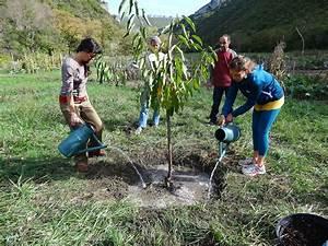 Planter Un Cerisier : ou planter framboisier ~ Melissatoandfro.com Idées de Décoration