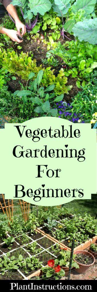 Gardening For Beginners by Vegetable Gardening For Beginners Guide Plant