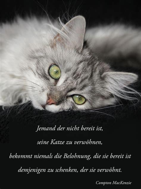 wie wir belohnt werden katzen poesie pinterest animaux