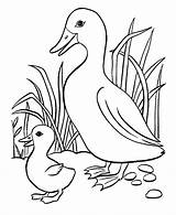 Duck Pond Drawing Coloring Pages Flying Getdrawings sketch template