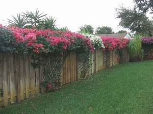 Bougainvillea next to trellises -- if only I still lived ...