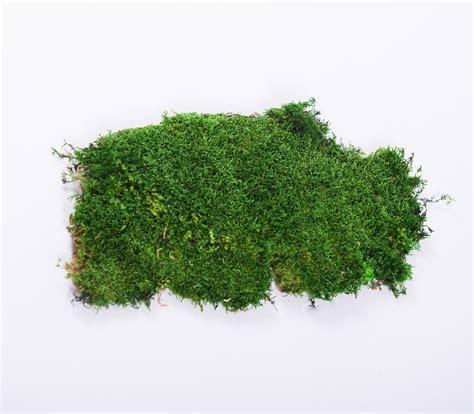 raw materials green mood preserved plants