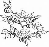 Coloring Colorat Berries Fructe Afine Toamna Planse Cu Fruits Vegetables Struguri Onion Strawberry sketch template