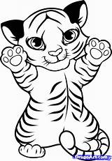 Coloring Tiger Pages Popular sketch template
