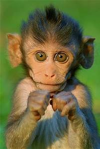 Baby Monkey - cuadernodelopinionista