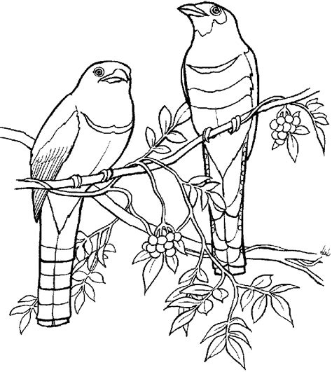 tropical island coloring pages coloring home