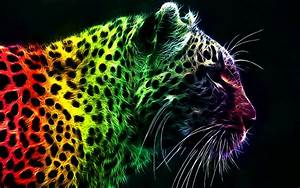 Rainbow Leopard wallpaper | 1920x1200 | #10903