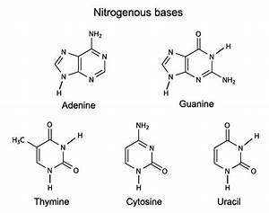 Mnemonic For Nitrogenous Bases   Mcat