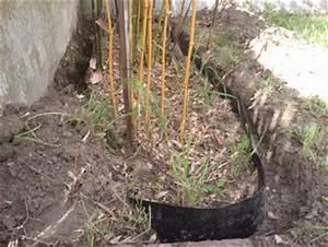 Barrière Anti Rhizome Castorama : comment contrer la pousse des racines de bambous ~ Dailycaller-alerts.com Idées de Décoration