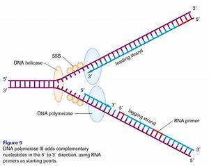 template dna http webdesign14com With what is a template in dna