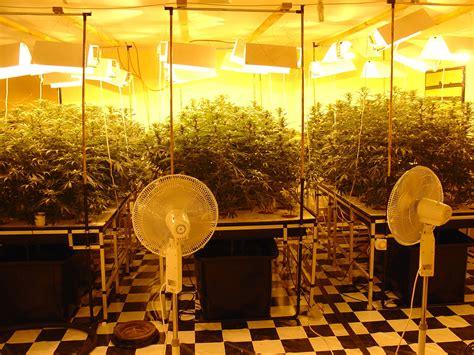 chambre hydroponique plantation hydro cannabis images