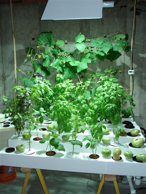 157 best hydroponics for your garden images on
