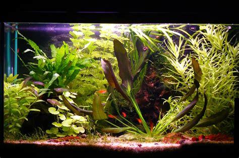 mon aquarium de 60 litres page 2