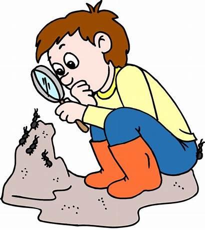 Inquiry Ants Clipart Nature Curiosity Adventures Clip