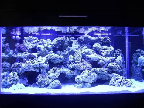 Saltwater Aquarium Aquascape Designs by Best 10 Reef Aquascaping Ideas On Nano Reef