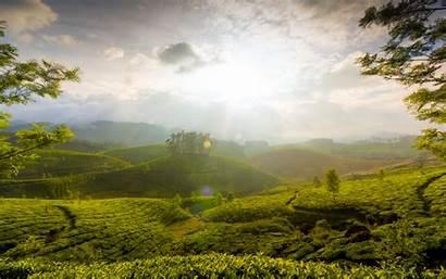 Kerala India Munnar Hills Wallpapers 1680 1050
