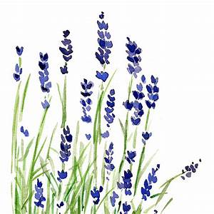 Lavender plant art print of original watercolor by ...
