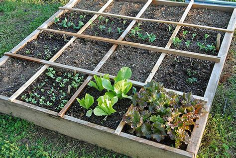 Square Foot Gardening by Easy Steps To Square Foot Garden Success The Garden Glove