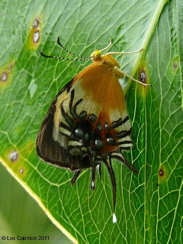 Spider That Looks Like Butterfly