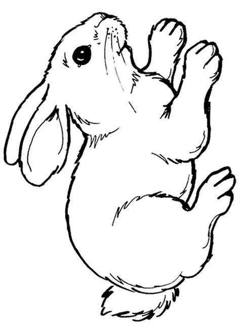 disegno computer da colorare per bambini 45 disegni di conigli da colorare pianetabambini it