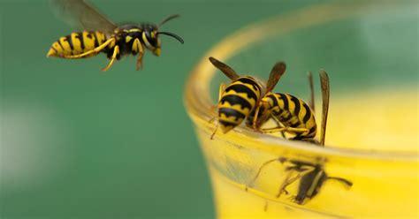 zo bestrijd je alle insecten  huis binnenland telegraafnl