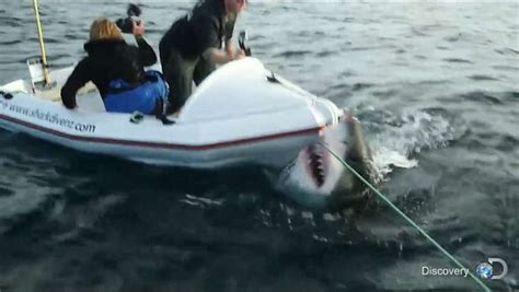 Fishing Boat Attacked By Shark South Africa by Great White Shark Attacks Boat In Shark Week Video From