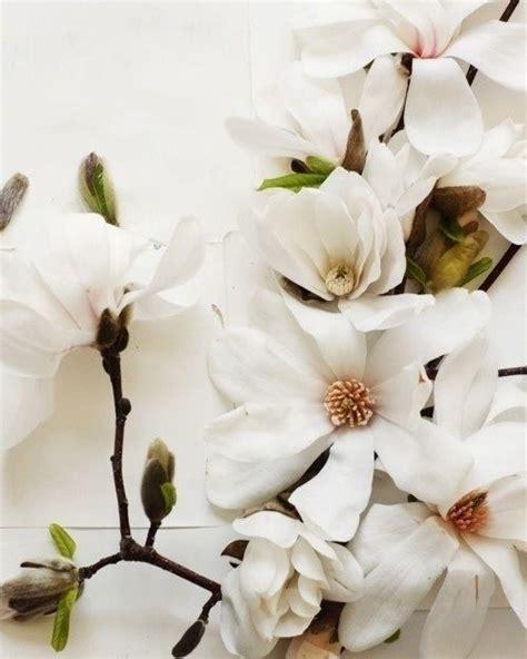 white flower Flores bonitas Flores blancas Flores exóticas