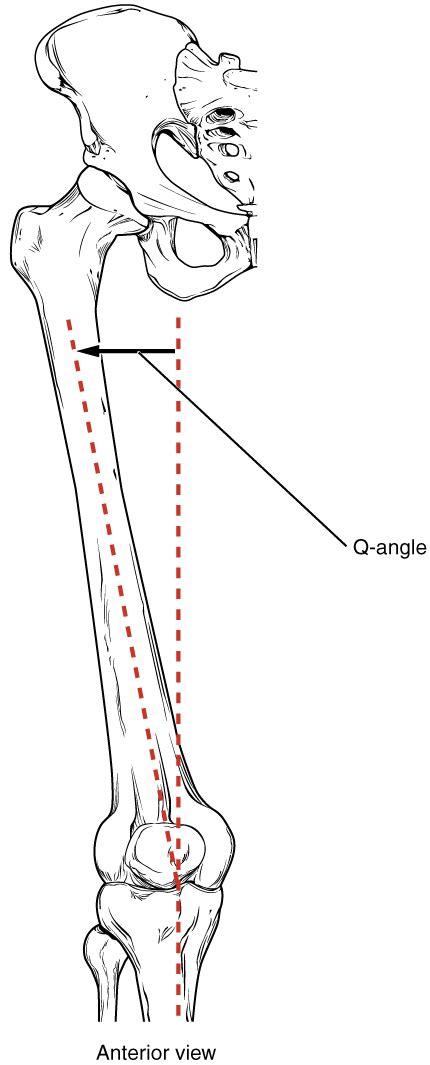 figure shows  anterior view   femur