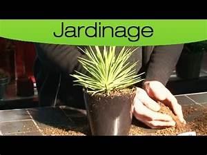 Comment Entretenir Un Cactus : comment rempoter un cactus youtube ~ Nature-et-papiers.com Idées de Décoration