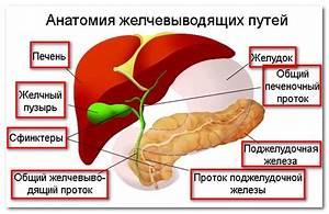 Перечень препаратов для желчного пузыря и печени