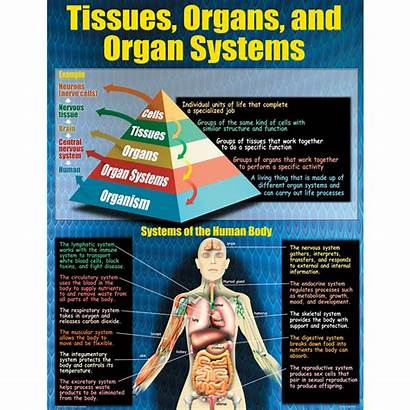 Living Organisms Poster Resources Grades 12th 4th