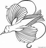 Coloring Bird Paradise Coloringall Printable Birds sketch template