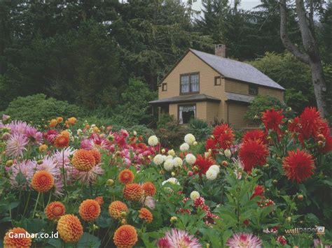 wallpaper gambar kebun bunga gambar wallpaper