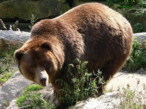 Lāči latvijā - Spoki