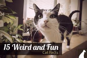 Weird Facts About Cats