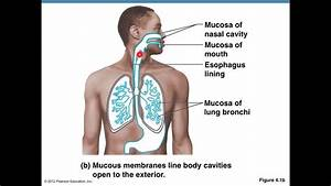 Bladder Mucosa Diagram