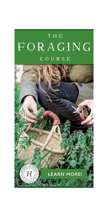 Foraging Course Breeds Chicken Herbal