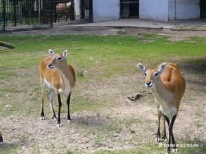 öffnungszeiten Zoo Rostock : warnem nde ausflugstipps f r deinen ostsee urlaub travelinspired ~ Eleganceandgraceweddings.com Haus und Dekorationen