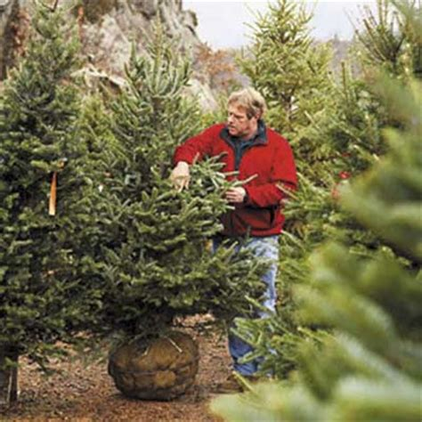 picking the perfect tree how to pick the perfect