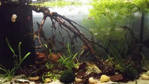 Weißer Schimmel Auf Holz Gefährlich : aquarium holz schimmel aquarium holz wei e f den sos hilfe alle roten neons sterben wei er ~ Eleganceandgraceweddings.com Haus und Dekorationen